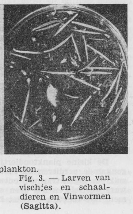 Gilis (1942, figuur 3)