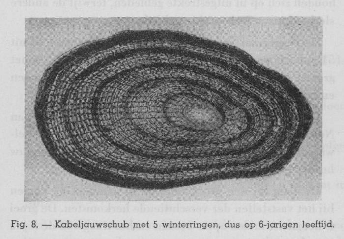 Gilis (1939, figuur 7)