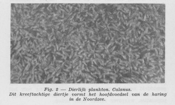 Gilis (1957, figuur 1.2)
