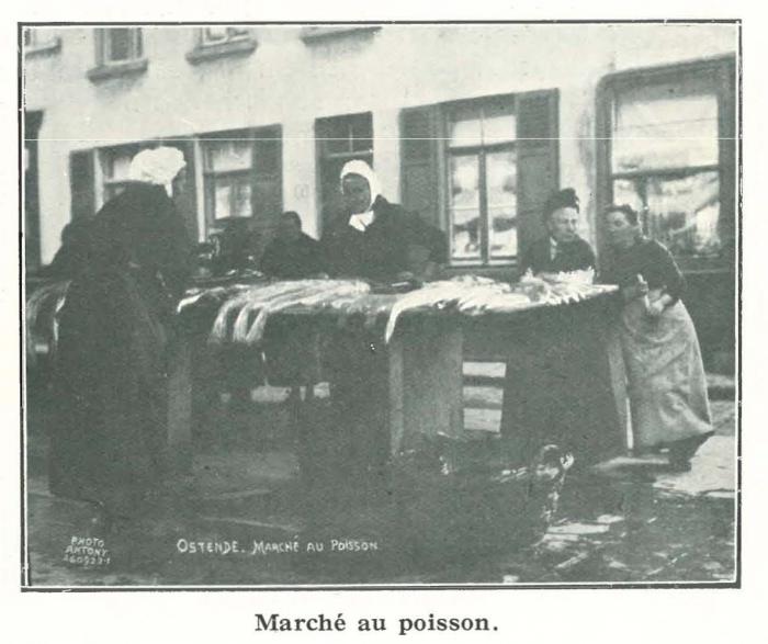Vandeput (1932, pl. 64)
