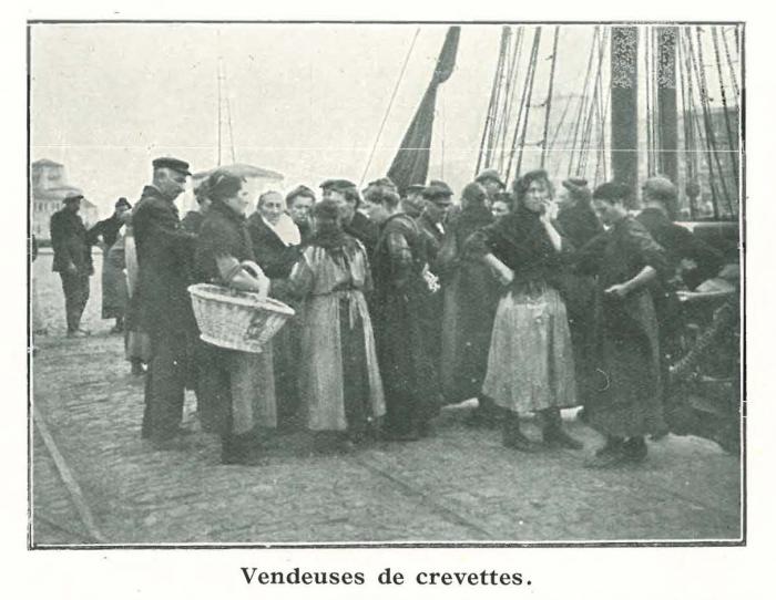 Vandeput (1932, pl. 68)