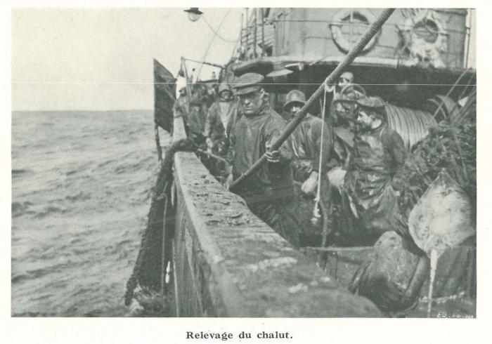 Vandeput (1932, pl. 94)