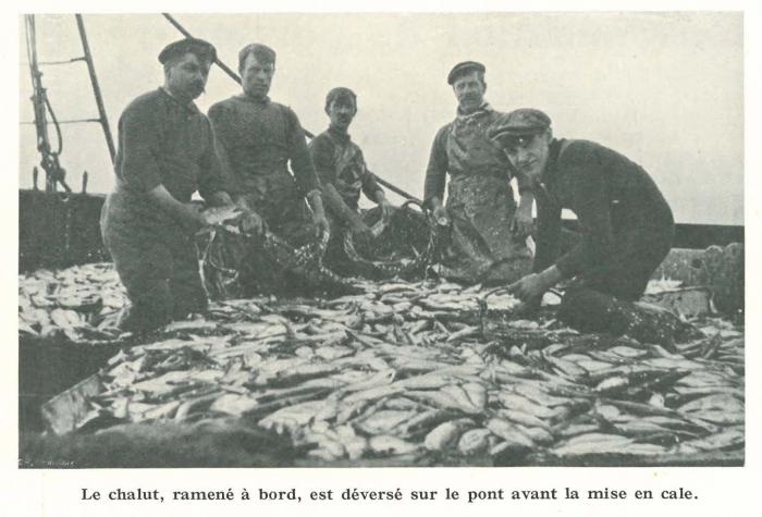 Vandeput (1932, pl. 95)