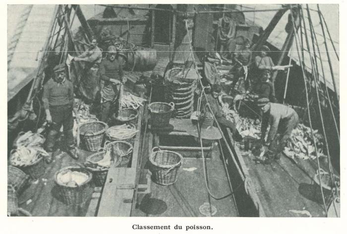 Vandeput (1932, pl. 96)