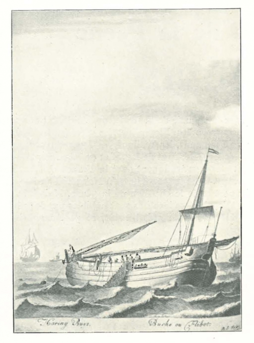 Vandeput (1932, pl. 99)