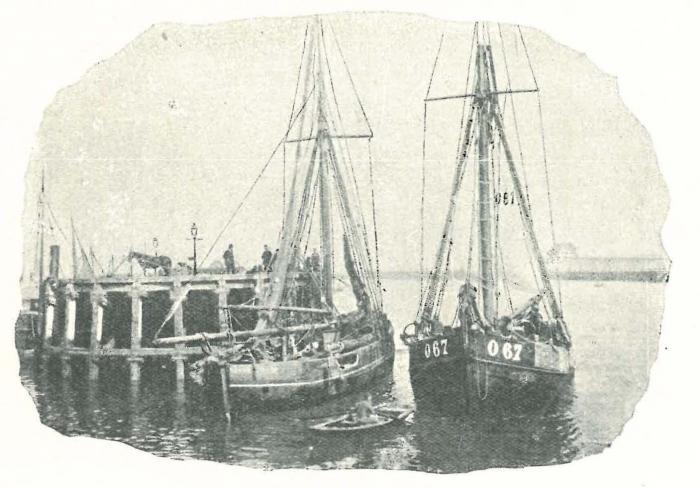 Vandeput (1932, pl. 101)