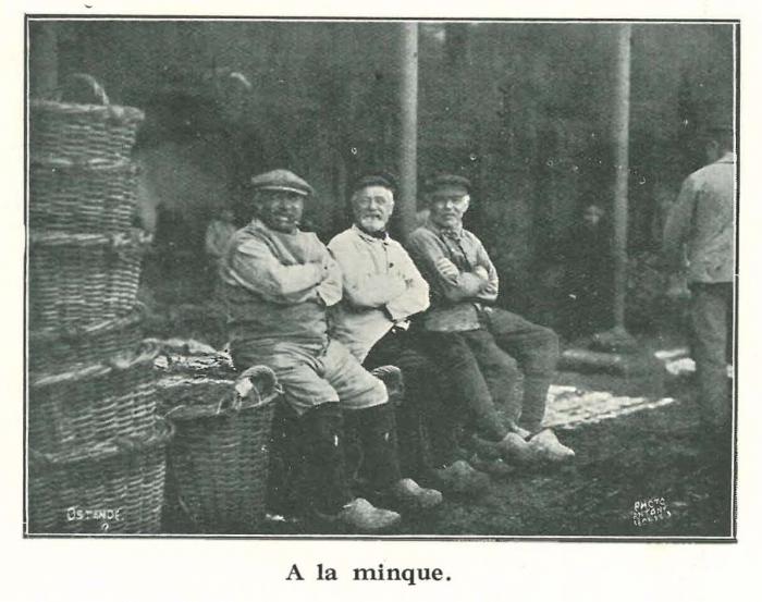 Vandeput (1932, pl. 109)