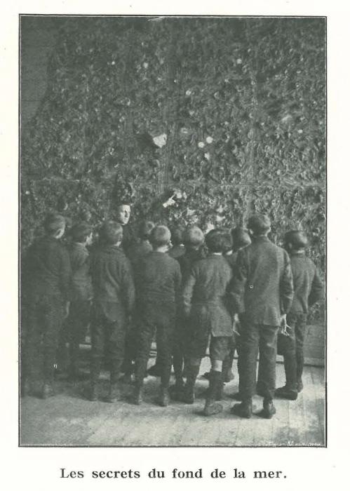 Vandeput (1932, pl. 120)