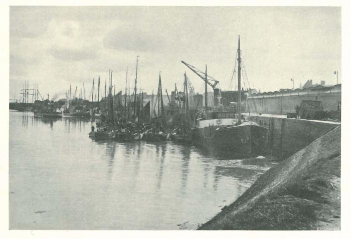 Vandeput (1932, pl. 186)
