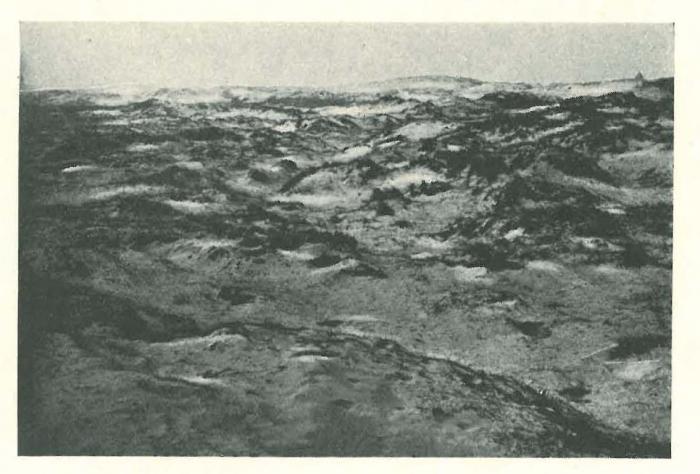 Vandeput (1932, pl. 192)