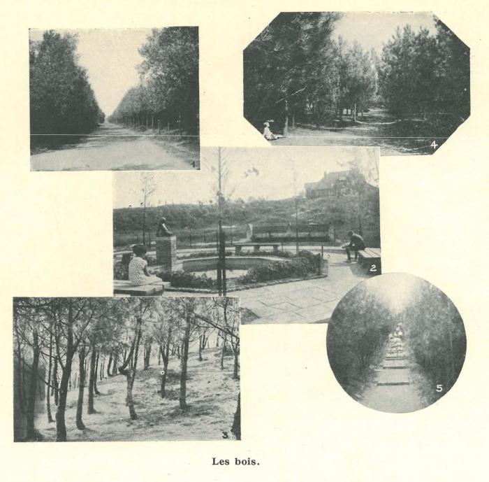 Vandeput (1932, pl. 231)