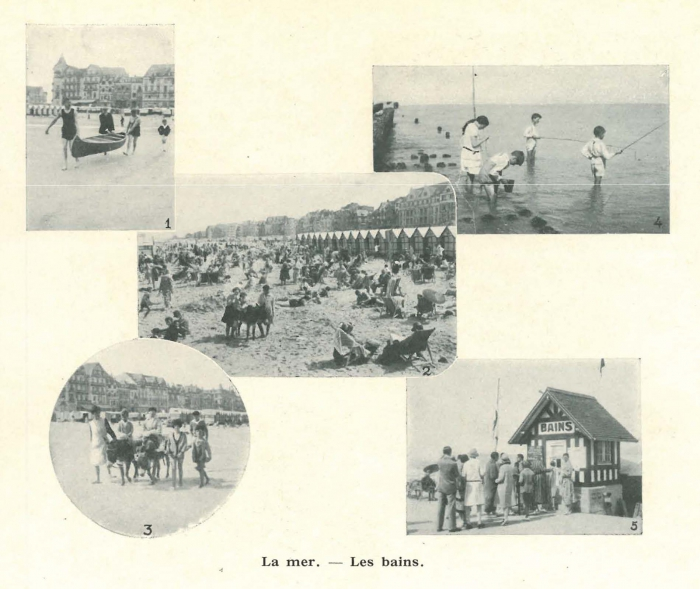 Vandeput (1932, pl. 235)