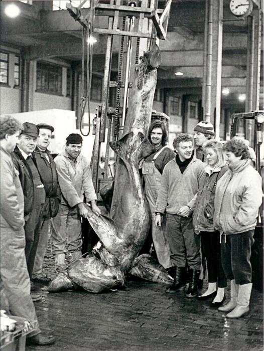 Vissers bij grote vis