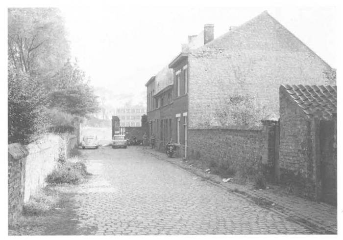 Van Caillie (1987, pl. 184)