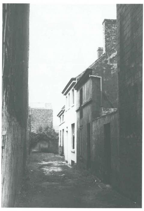 Van Caillie (1991, pl. 182)