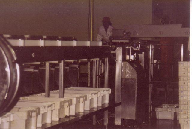 Kisten waar de op gewicht gesorteerde vis in wordt opgevangen