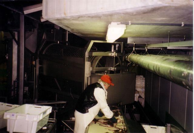 Vis klaarleggen voor automatische sortering