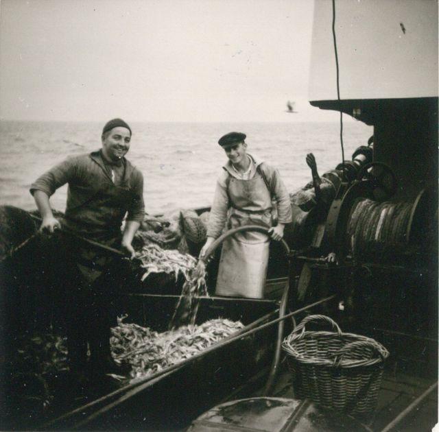 Vangst kuisen aan boord van de Z.402 Atlantis (Bouwjaar 1963)
