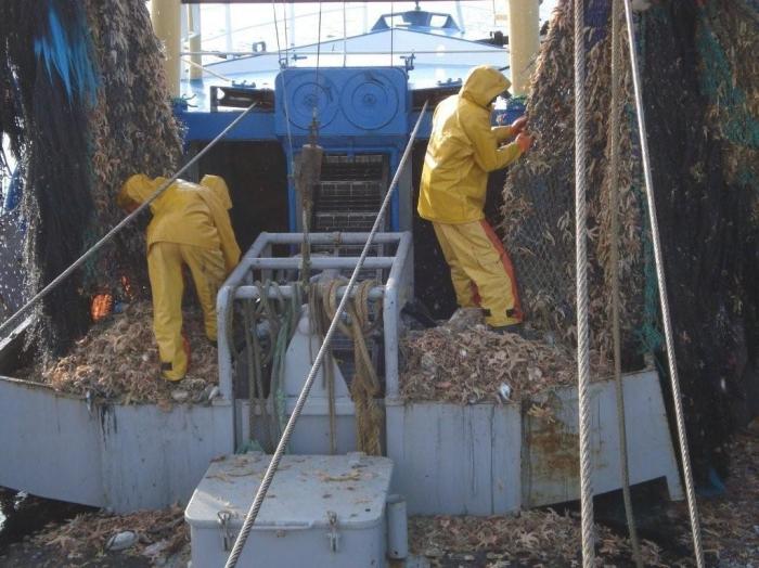 Zeesterren uit net halen
