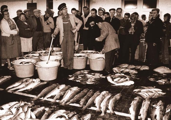 Vis kopen in de vismijn
