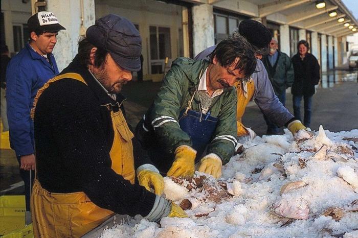 Aangelande vis sorteren