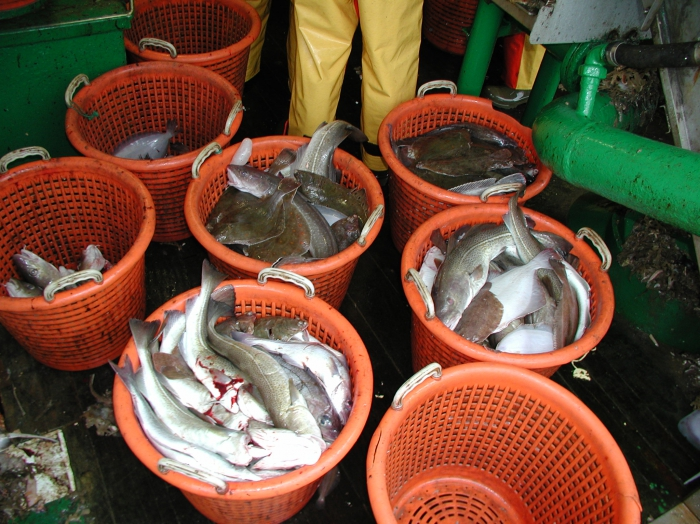 Visvangst in manden aan boord