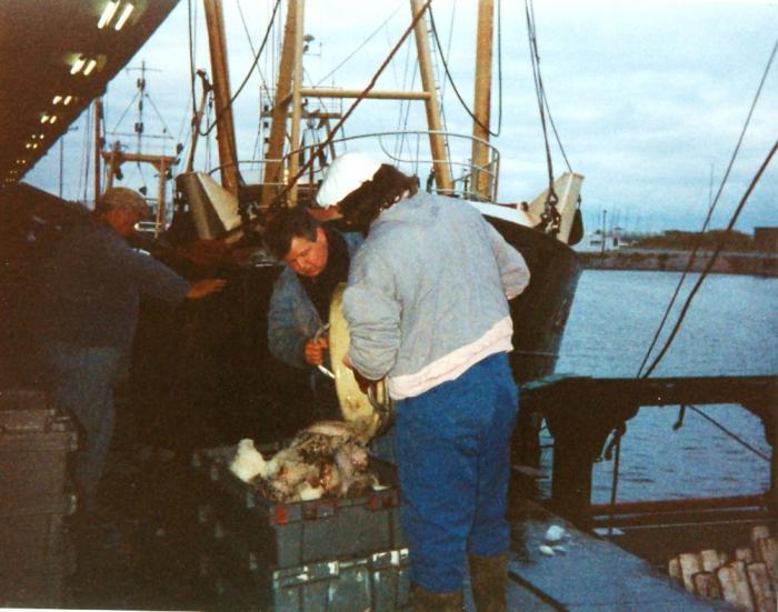 Vis wordt gelost te Oostende