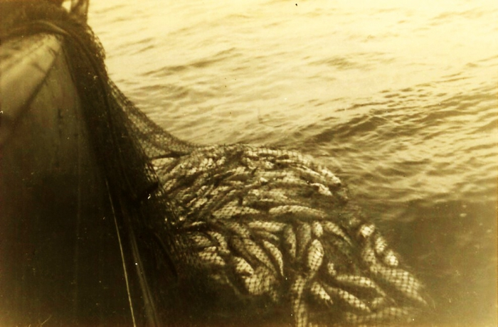 Net met vangst