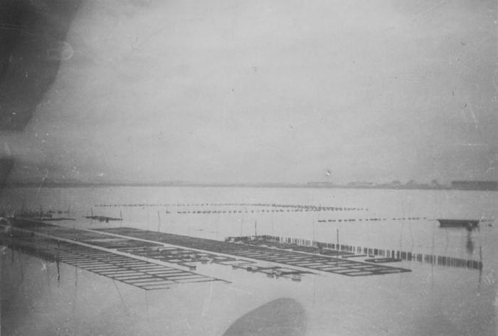Oesterkweek in de Spuikom, 1937-1938