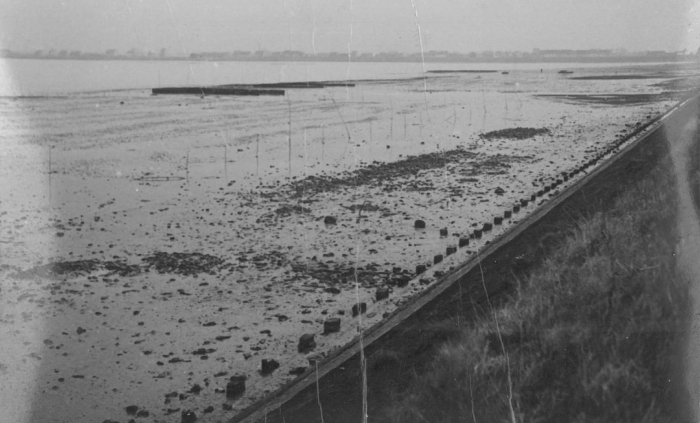 Oesterkweek in de Spuikom, 1940