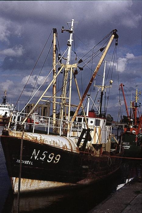 N.599 ZEEVOGEL