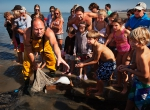 Xavier Vanbillemont, one of the twelve remaining horseback shrimp fishermen of Oostduinkerke, Belgium, unloading the morning's catch on the beach, to the fascination of onlookers