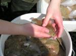 Determineren van platvissen