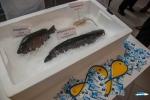 Sustainable Fish Week 2014