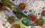 Sea-urchins and others at a rock in approximately 3 m of depth