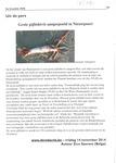 Uit de pers: Grote pijlinktvis aangespoeld in Nieuwpoort