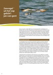 Zeevogel 'uit het sop gelicht': Jan-van-gent