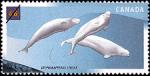 Canadian Postage Stamp (2000): Beluga Whale, Delphinapterus leucas
