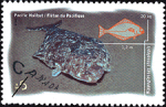 Canadian Postage Stamp (1997): Pacific Halibut, Hippoglossus stenolepis