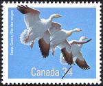 Canadian Postage Stamp (1986): Snow Goose