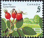 Canadian Postage Stamp (1992): Rose Hip, author: National Archives of Canada