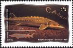 Canadian Postage Stamp (1997): Atlantic Sturgeon, Acipenser oxyrhynchus