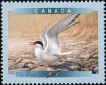 Canadian Postage Stamp (2001): Arctic Tern, author: National Archives of Canada