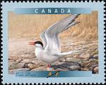 Canadian Postage Stamp (2001): Arctic Tern