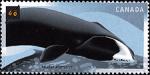 Canadian Postage Stamp (2000): Bowhead, Balaena mysticetus