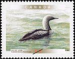 Canadian Postage Stamp (2000): Pacific Loon