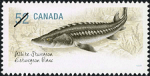 Canadian Postage Stamp (2007): White Sturgeon, author: National Archives of Canada