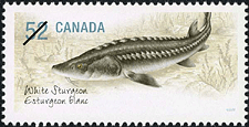 Canadian Postage Stamp (2007): White Sturgeon