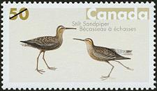 Canadian Postage Stamp (2005): Stilt Sandpiper
