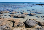 Stromatolites, author:  Virginia Edgcomb, Woods Hole Oceanographic Institution